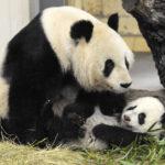 Зоологическата градина във Виена е най-харесваната в Европа
