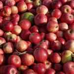 Австрия: Ден на ябълката