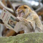 Зоопарк: Да осиновиш животно