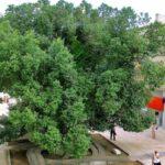 Едно дърво, за да си спомним гората