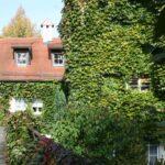 Община Виена бори градските горещини със зеленина