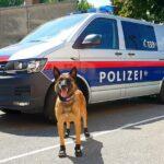 Полицейските кучета във Виена със специални обувки за защита от горещия асфалт
