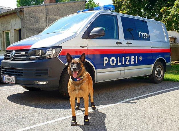 Кучетата на виенската полиция с обувки срещу горещините