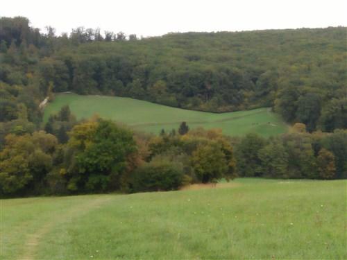 поляна във Виенската гора