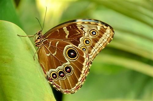 Дом на пеперудите, Виена