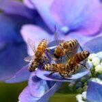 Виена: Пчели на покрива, пчели в дигиталния бизнес