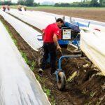 Сезонните работници на полето – много работа, ниско заплащне