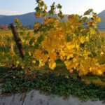 Фото Меланж: Есента в моя обектив (галерия 1)