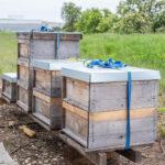 """Общинското предприятие """"Виенски линии"""" ще се грижи за 80 пчелни семейства"""